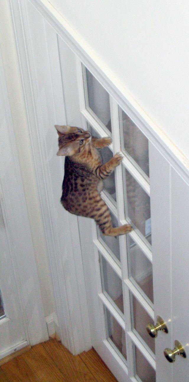 image-chat-porte-fenêtre-fanfan