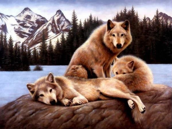 beaux-loups-flora